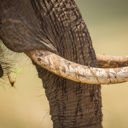 TEXTURE, Canon EOS-1D X, Canon EF 500mm f/4L IS