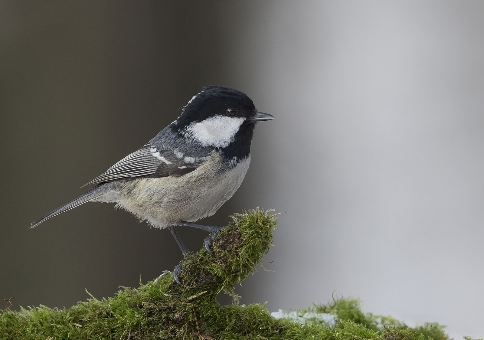 Photograph Coal Tit by Helge Hammertoft on 500px