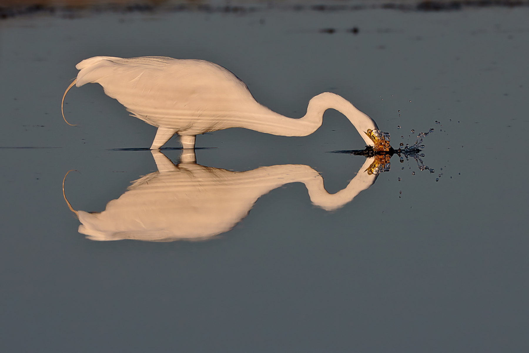 Photograph Mirrored Strike by Scott Evers on 500px