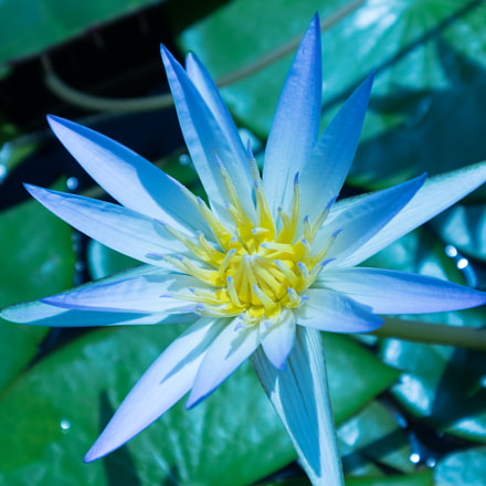 Water Lilly, Canon EOS M10, Canon EF-M 15-45mm f/3.5-6.3 IS STM