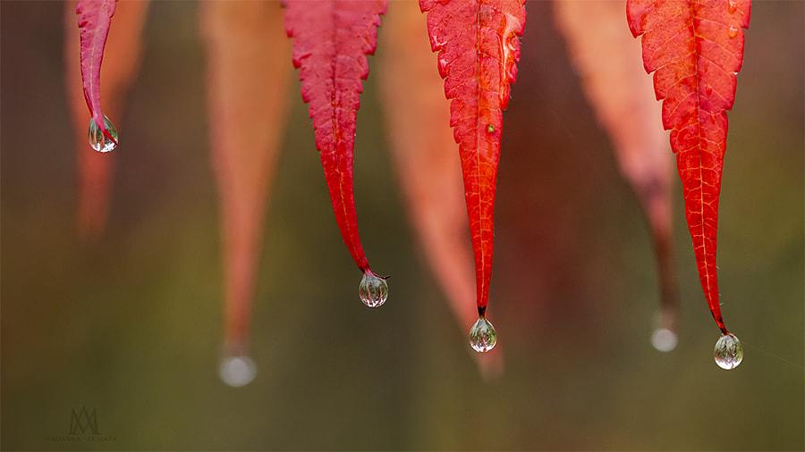 wet sumac