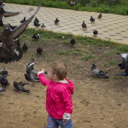 ИГРА С ГОЛУБЯМИ / PLAYING WITH PIGEONS, Nikon D3100, Sigma 28-300mm F3.5-6.3 DG Macro