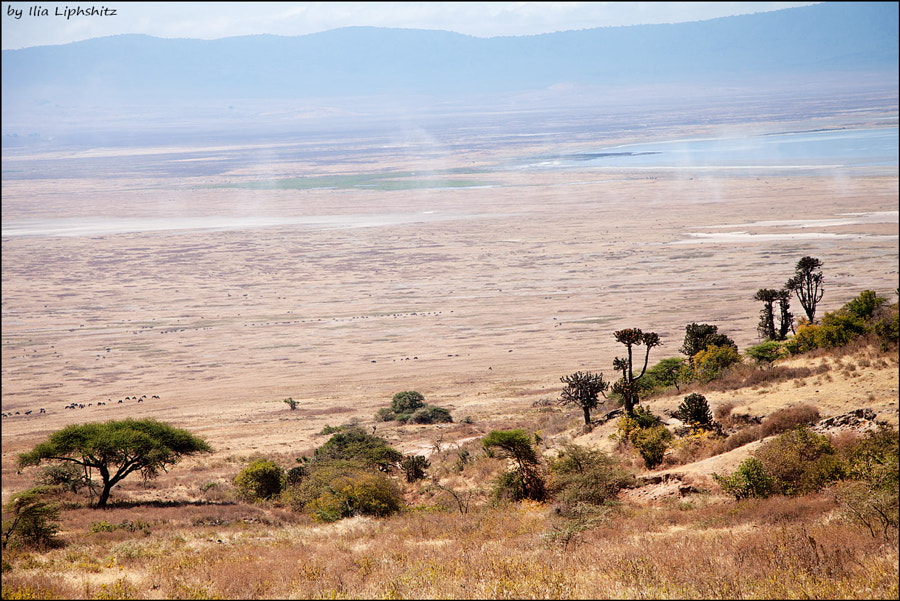 Landscapes of Ngorongoro №2
