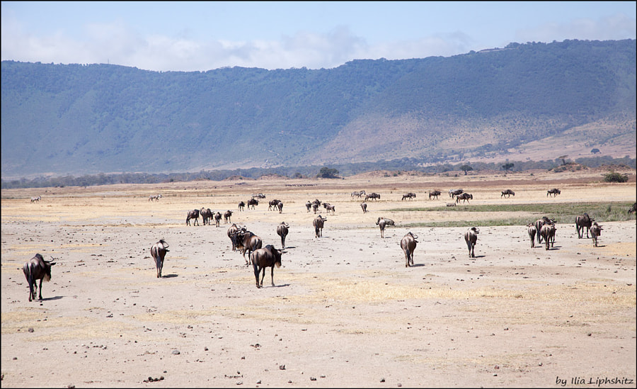Landscapes of Ngorongoro №3