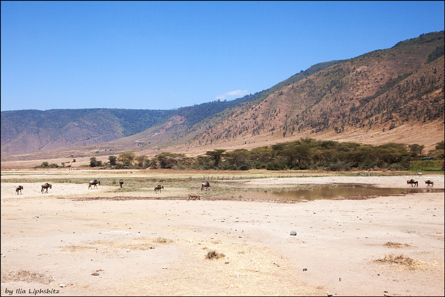 Landscapes of Ngorongoro №4