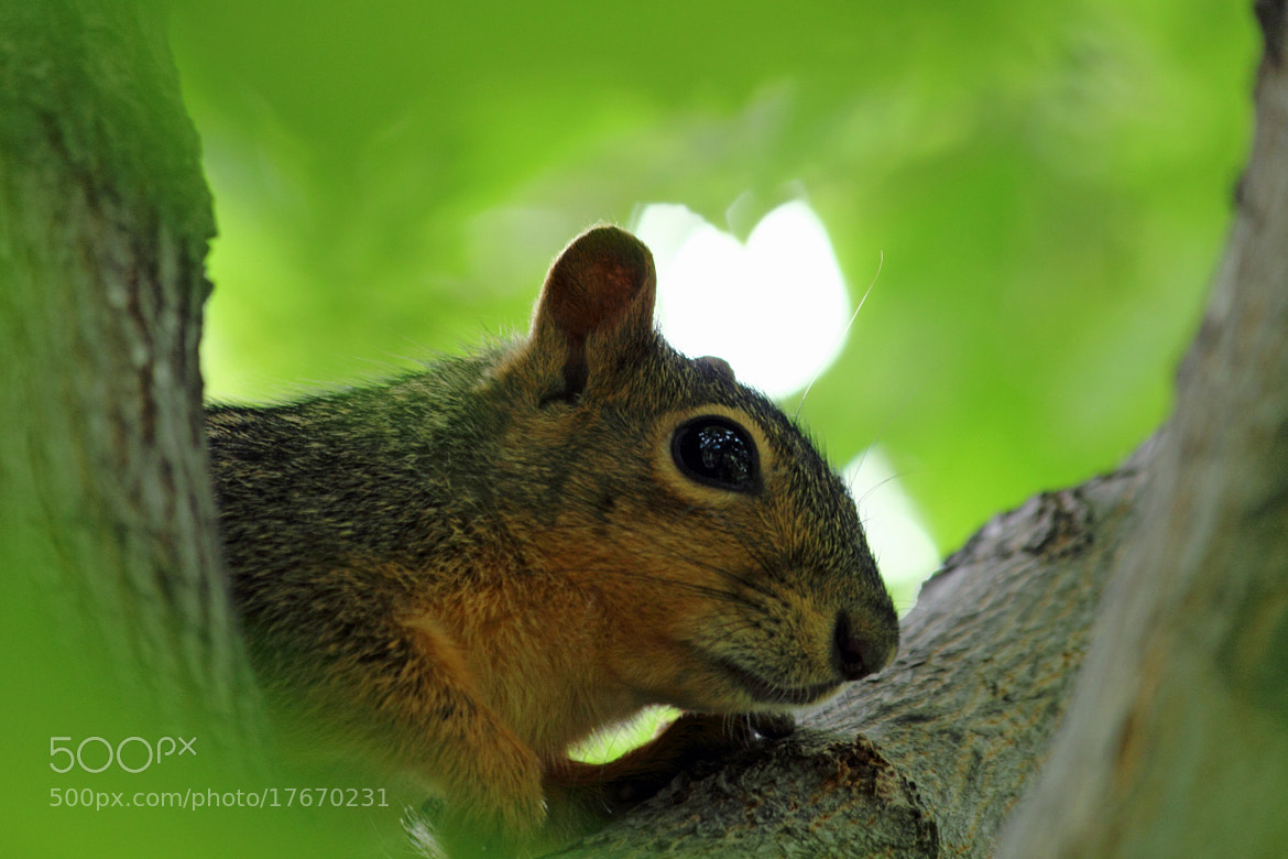 Photograph Getting too close by Jeff Tiemann on 500px