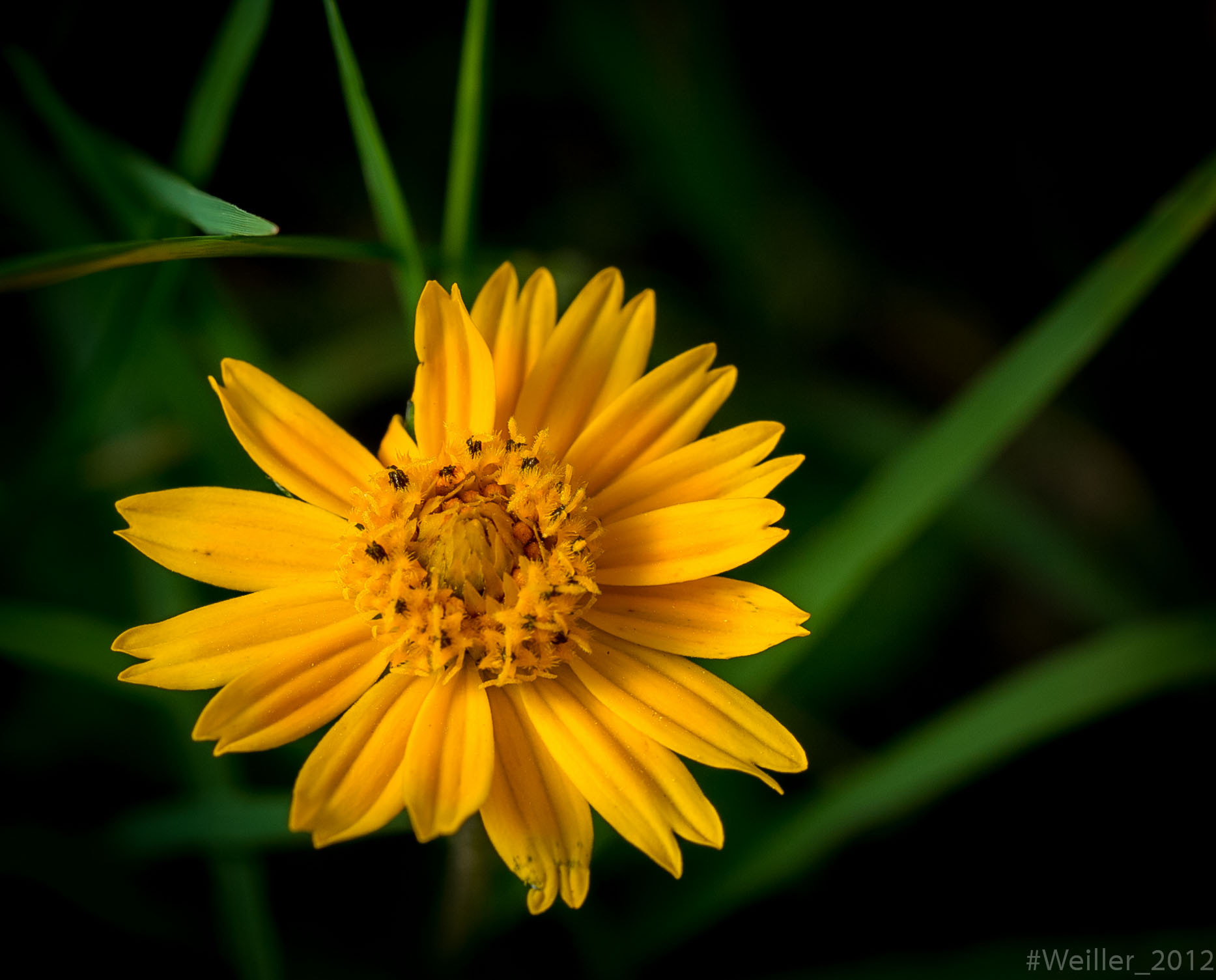 Photograph Yellow flower by Weiller :-) on 500px