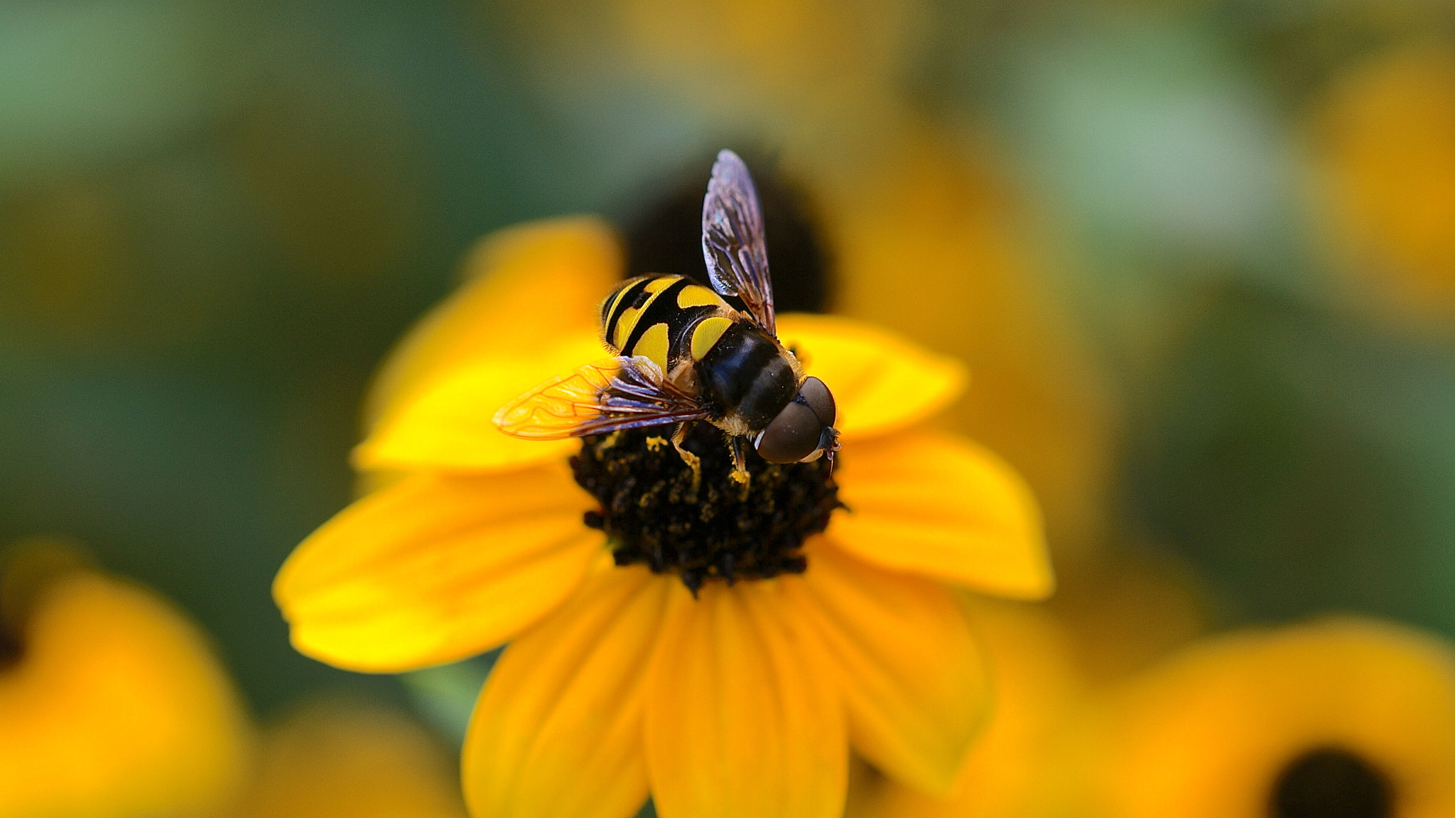 Photograph Passive Pollination  by Zack Parton on 500px