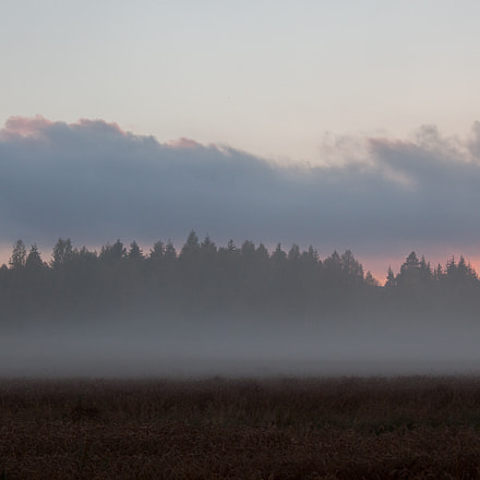 Fog at sunset, Canon EOS 500D, Canon EF-S 18-55mm f/3.5-5.6 IS