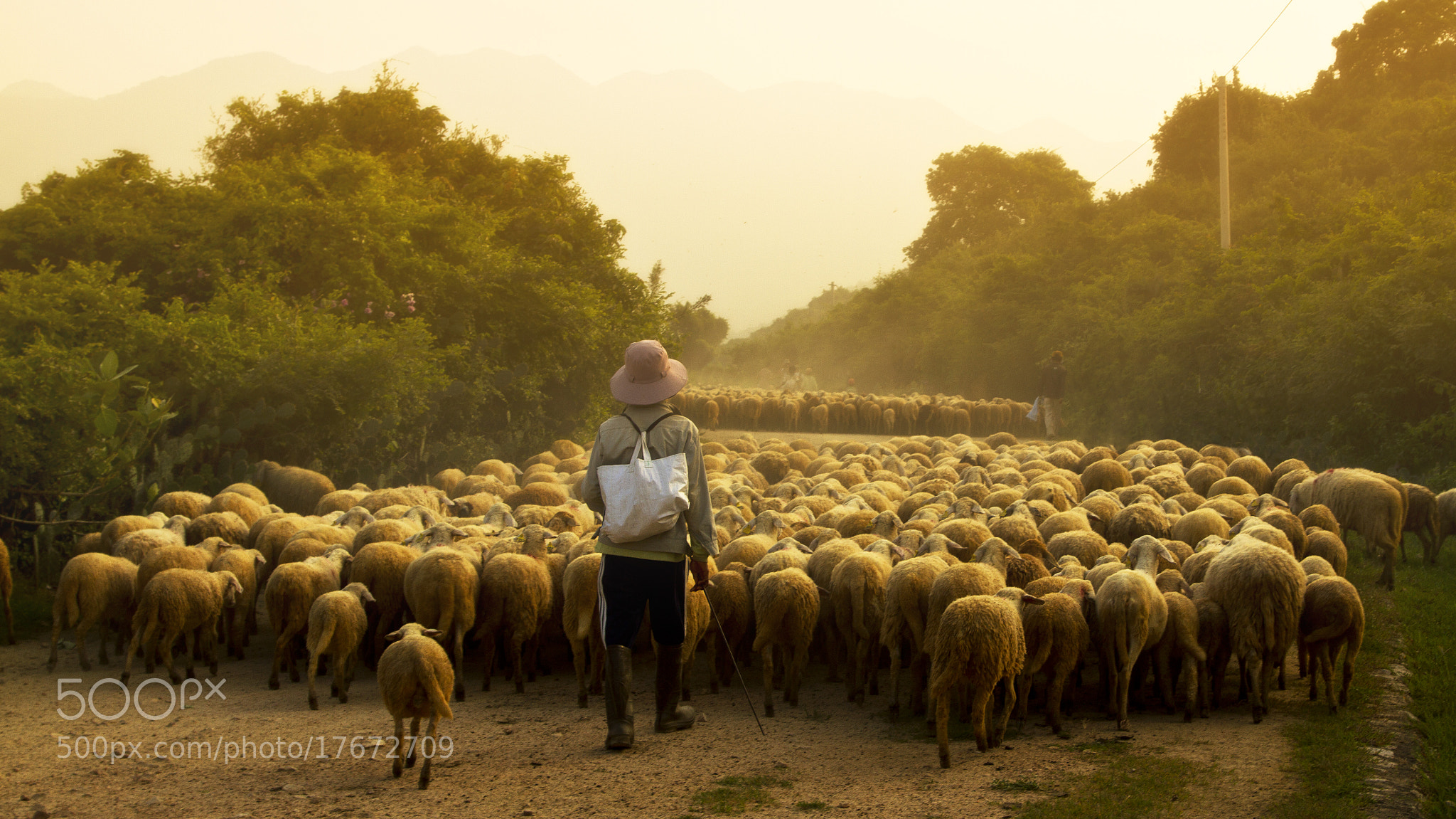 Photograph Come home by Pham Ty on 500px