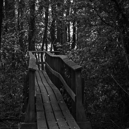 path in the forest, Fujifilm X-E1, XF55-200mmF3.5-4.8 R LM OIS