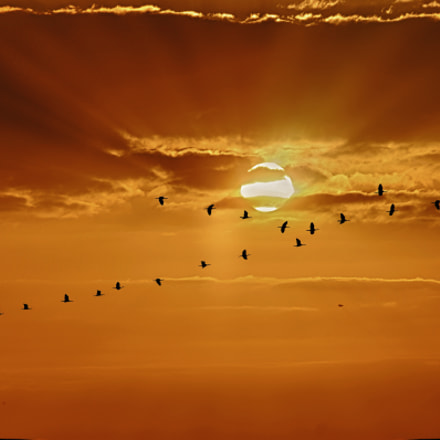 migration, Canon EOS 500D, Canon EF-S 55-250mm f/4-5.6 IS