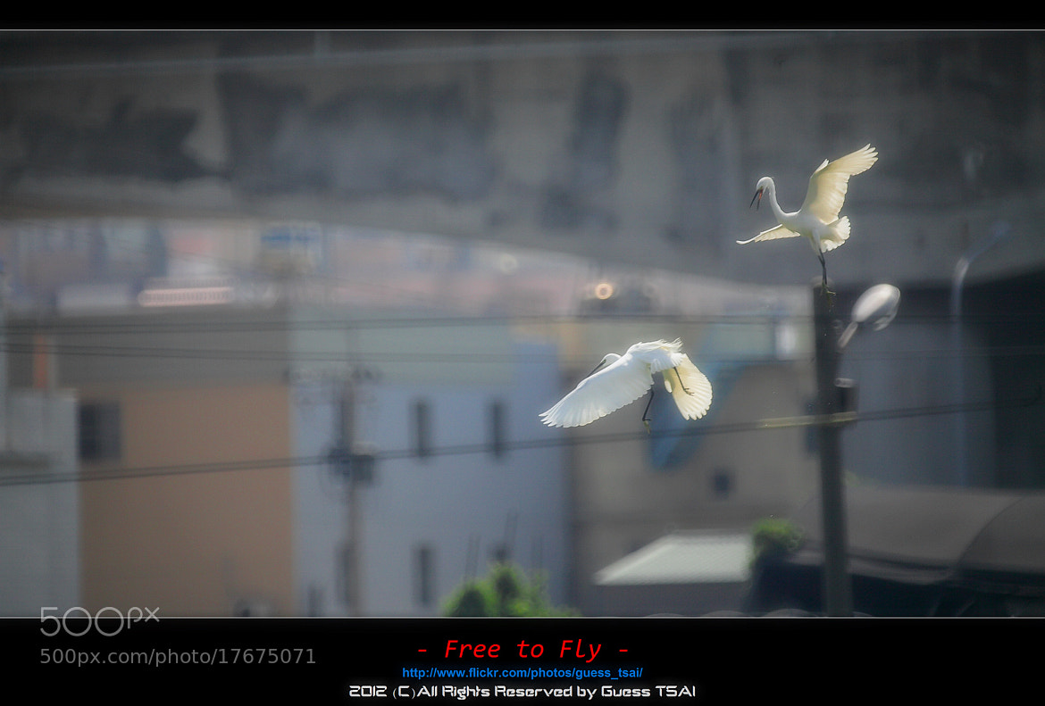 Photograph Free to Fly by Guess Tsai on 500px