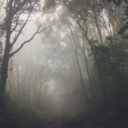 Misty Forest, Canon EOS 7D, Canon EF-S 18-135mm f/3.5-5.6 IS