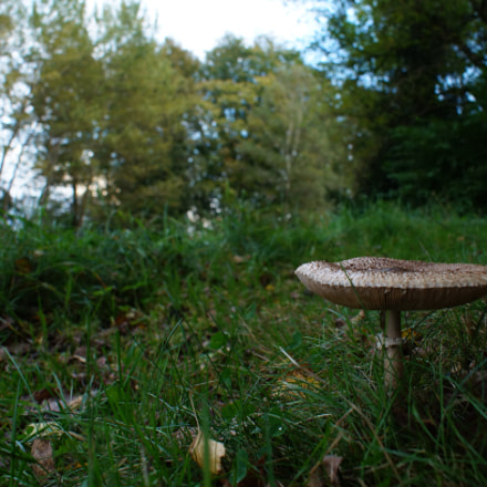 Mushroom in the grass, Sony SLT-A57, Minolta/Sony AF DT 18-70mm F3.5-5.6 (D)