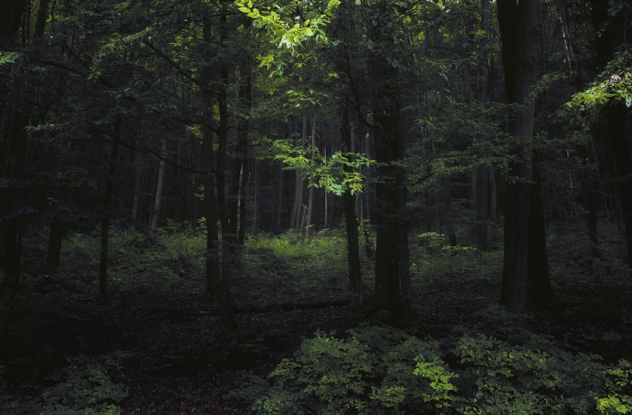 Deep in the woods by Kinga Sorbán on 500px.com