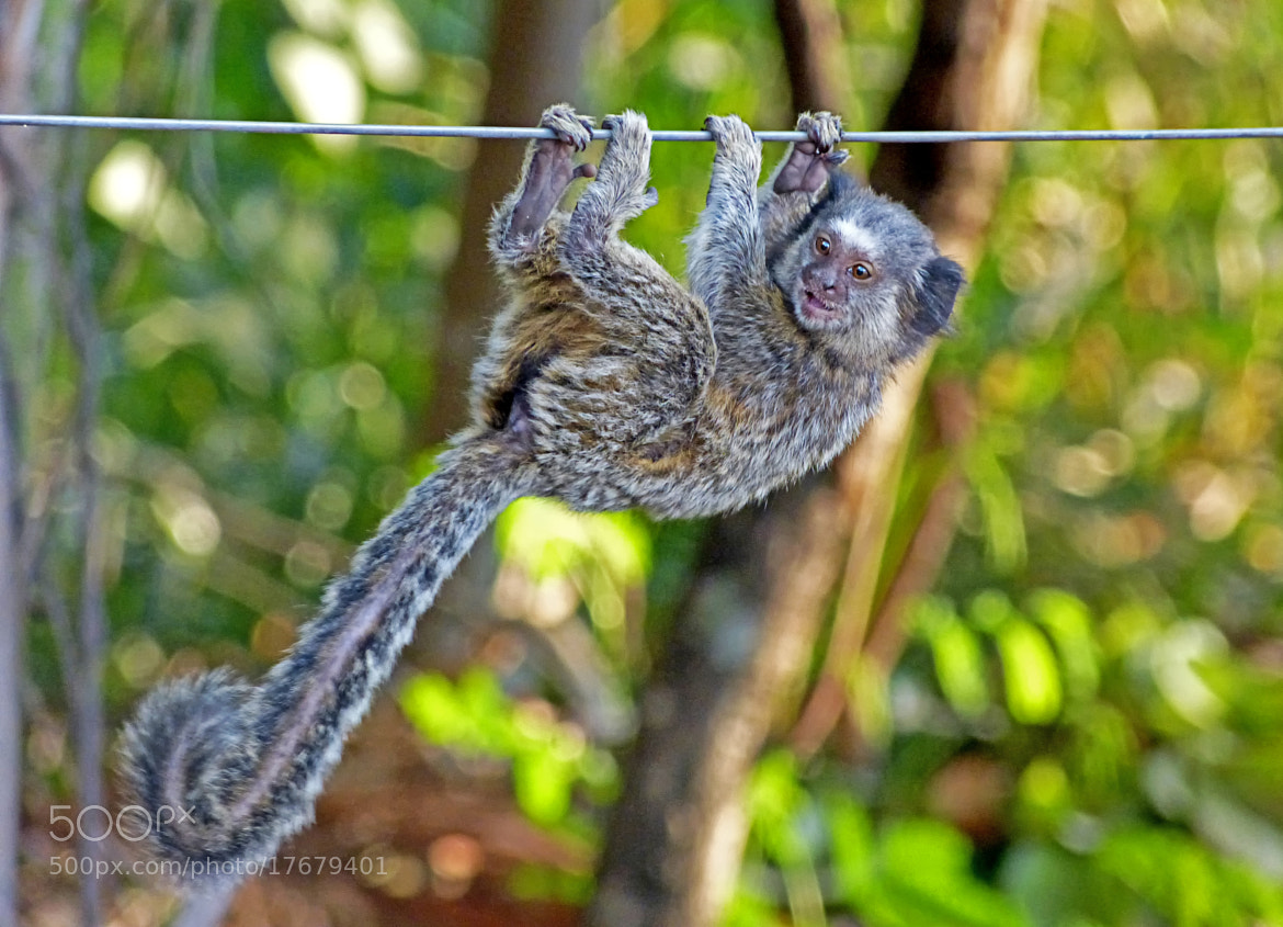 Photograph Holding firm and being cute while doing it! by Pedro Henrique Evangelista on 500px