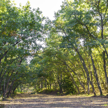 bosque., Canon EOS 1100D, Canon EF-S 18-55mm f/3.5-5.6 IS II