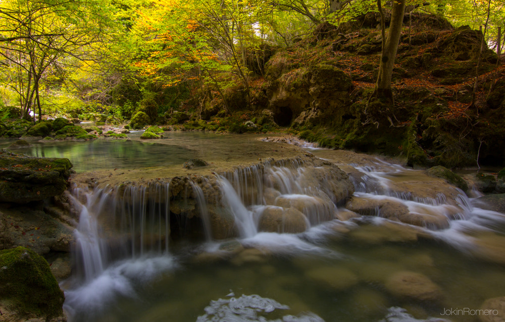 Photograph Fall in fall by Jokin Romero on 500px