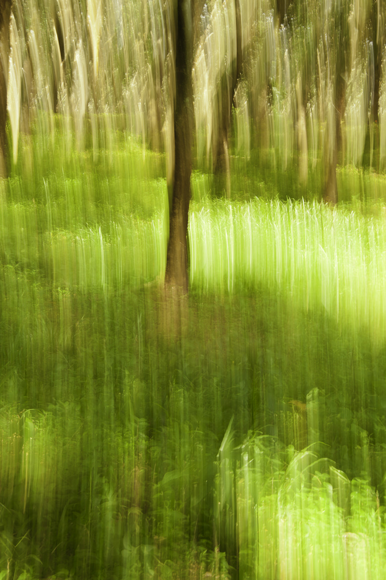 Photograph Abstract Impressionist Landscape by Satheesh Nair on 500px