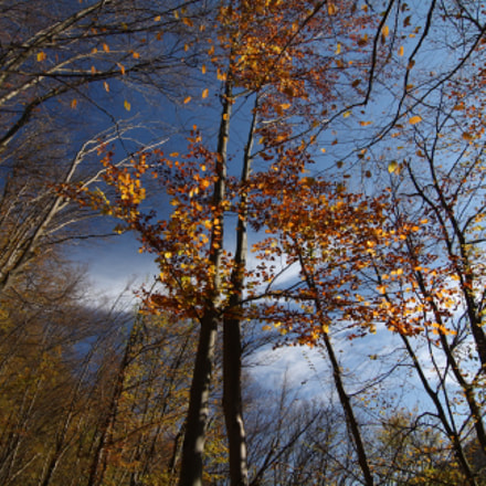 Autumn, Canon EOS 1000D, Tokina AT-X 116 AF Pro DX 11-16mm f/2.8