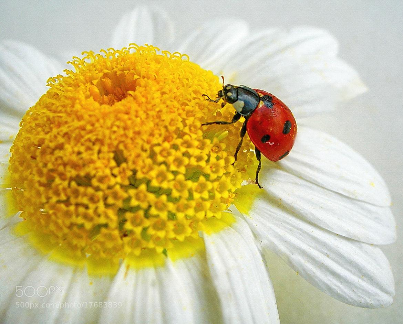 Photograph lady bug by tugba kiper on 500px