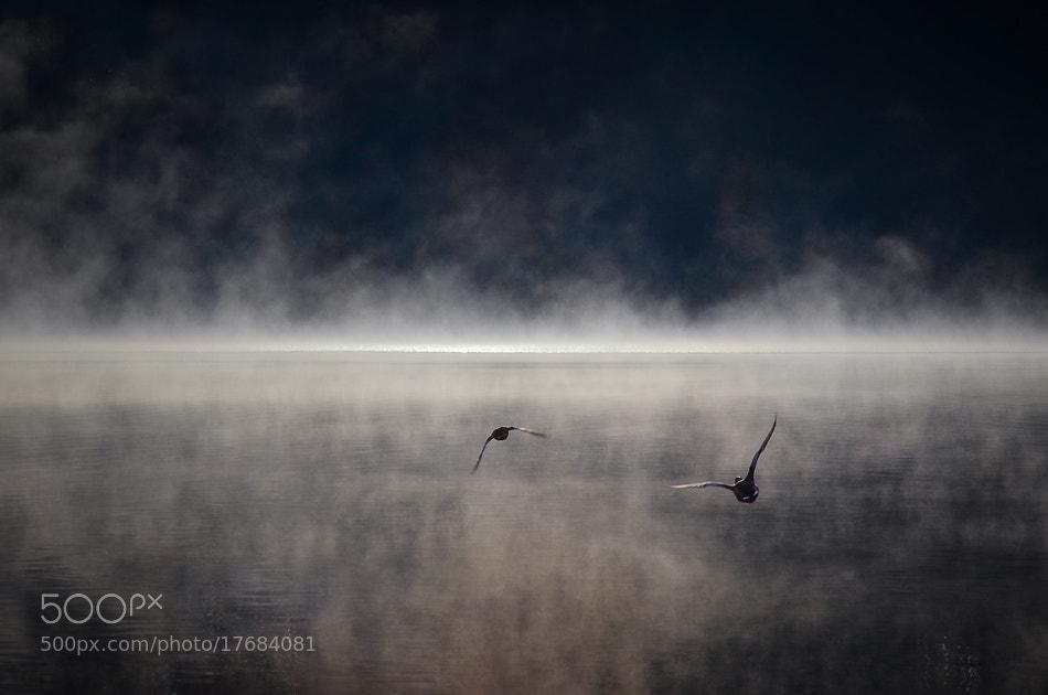 Photograph Race by Uroš Florjančič on 500px