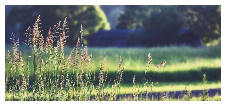 Photograph Setting Sunlight by Brenton Biggs on 500px