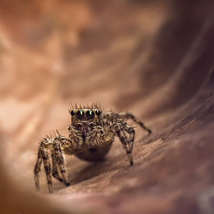 J Spider on mars