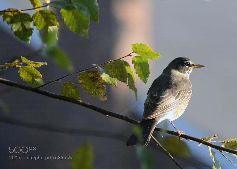 Photograph bird outside my window by mark luftig on 500px for 2 little birds sat on my window