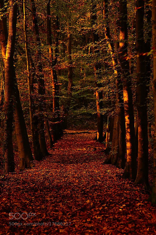 Photograph Autumn Walk by Kirsten F. on 500px