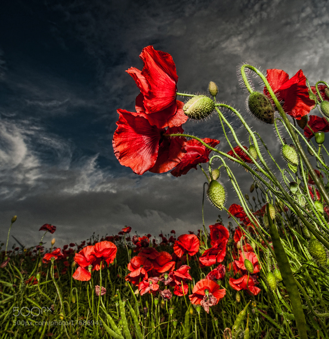 Photograph Remember Them by WilsonAxpe /  Scott Wilson on 500px