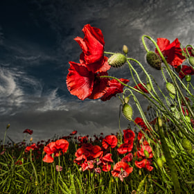 Remember Them by WilsonAxpe /  Scott Wilson (wilsonaxpe)) on 500px.com