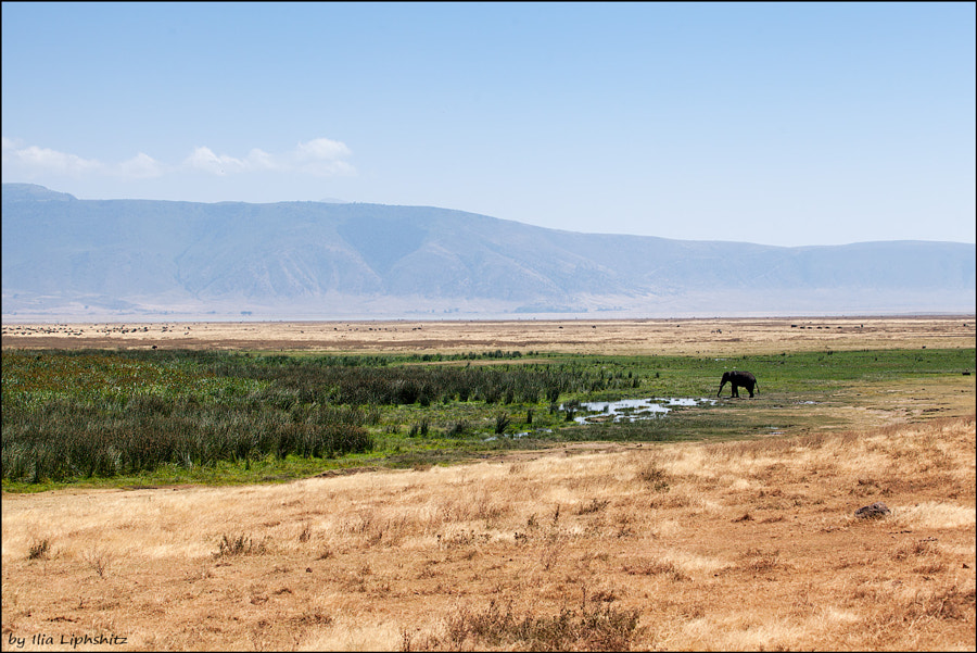 Landscapes of Ngorongoro №6