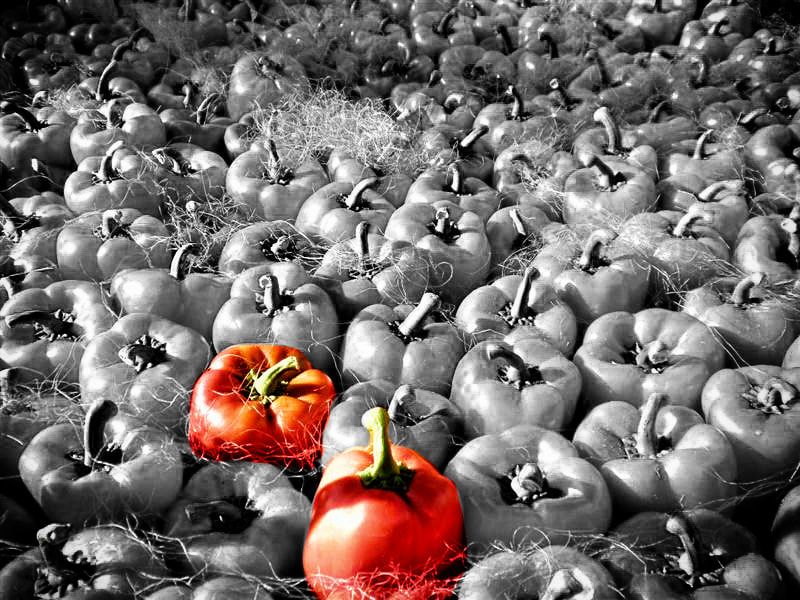 Photograph REDS IN A BASKET  by the frie on 500px
