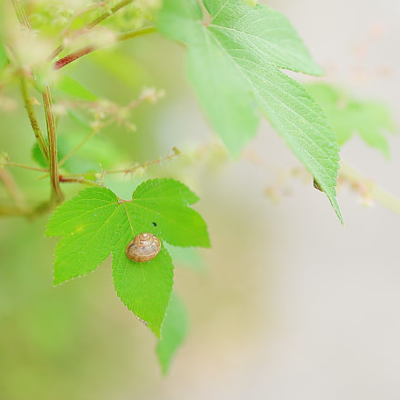 snail on leaf, Canon EOS 5D MARK III, Canon EF 35mm f/1.4L II USM