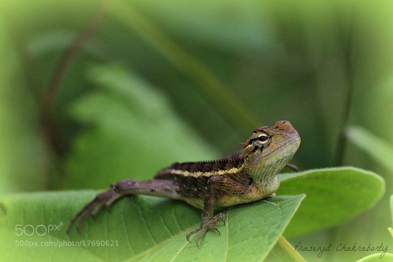 Photograph The Arrogant Iguana by Prasenjit Chakraborty on 500px