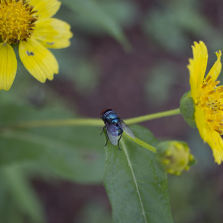 Fly, Canon EOS 600D, Canon EF-S 24mm f/2.8 STM