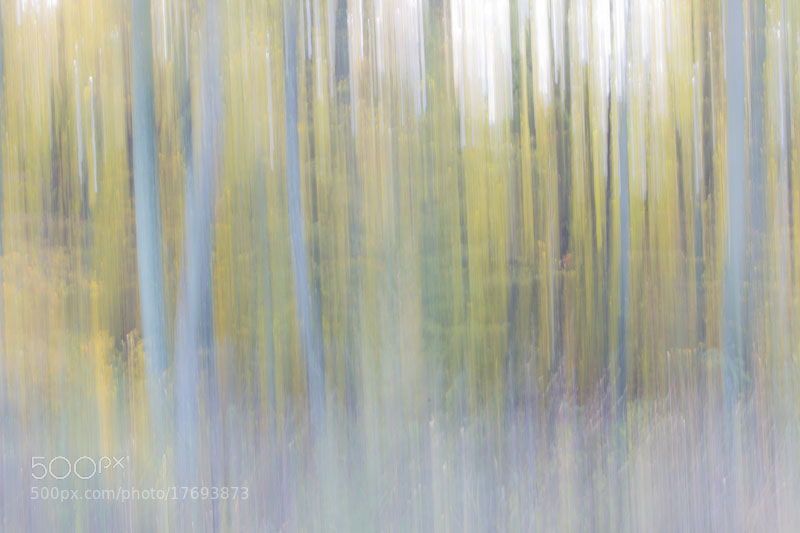 Photograph Blurry trees by Luka  Klun on 500px