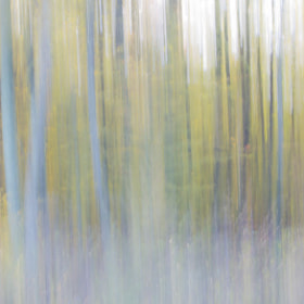 Blurry trees by Luka  Klun (luklun)) on 500px.com
