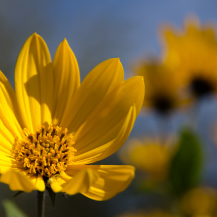 Need for Sun, Canon EOS 60D, Canon EF-S 15-85mm f/3.5-5.6 IS USM