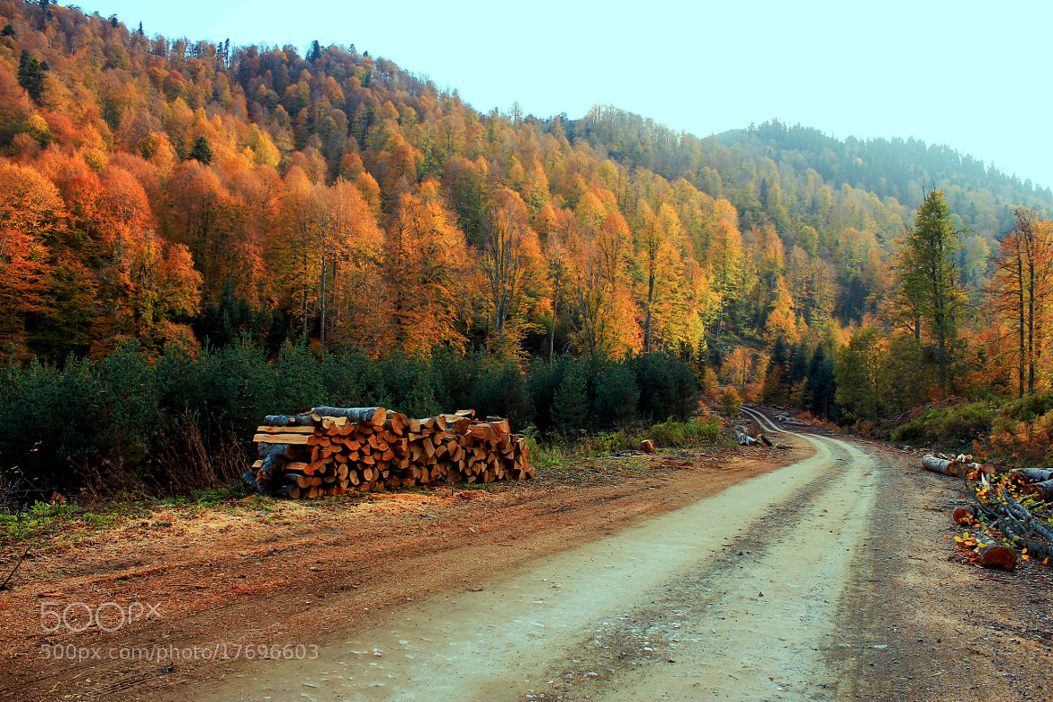 Photograph Forest Road by zen free on 500px