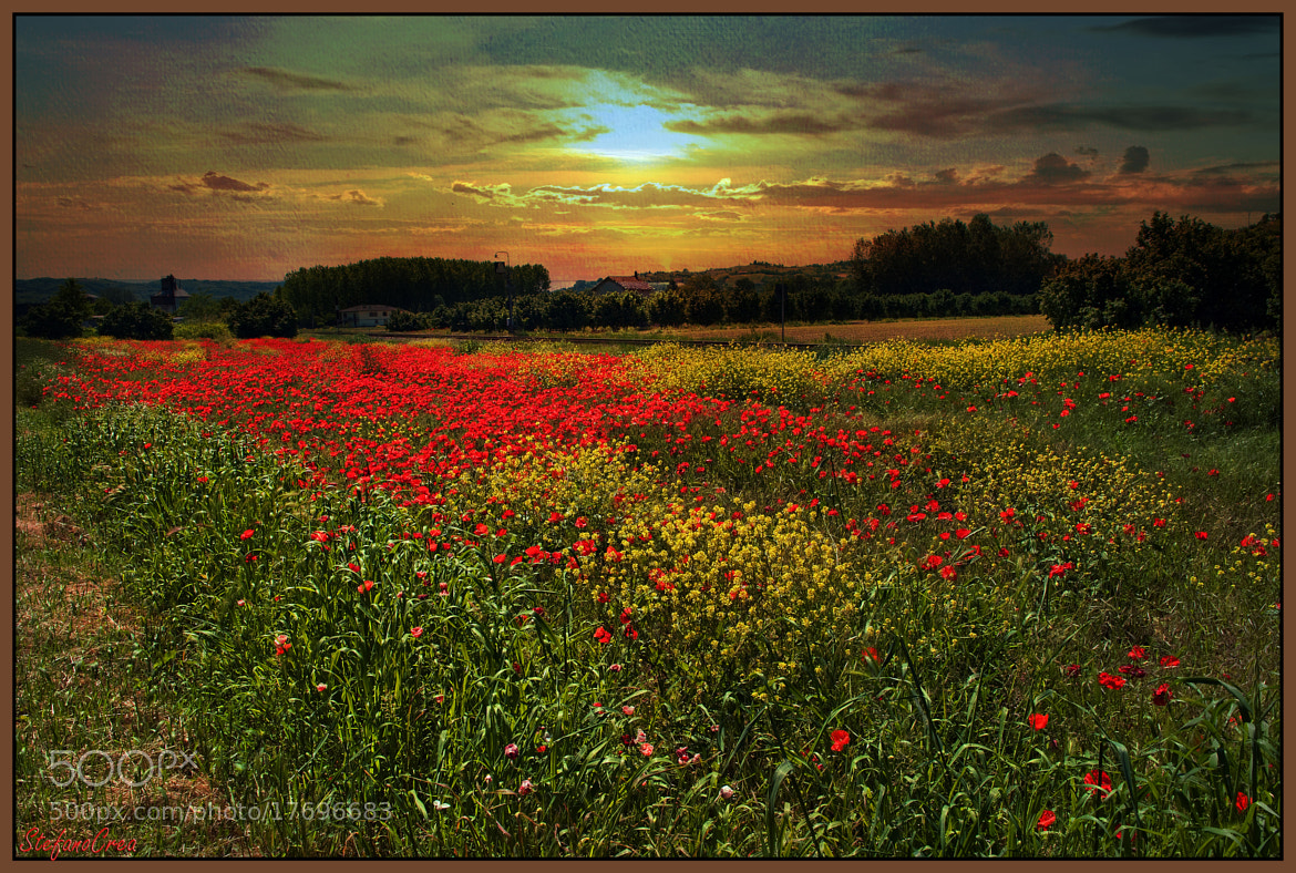 Photograph Sunset on poppies field by Stefano Crea on 500px