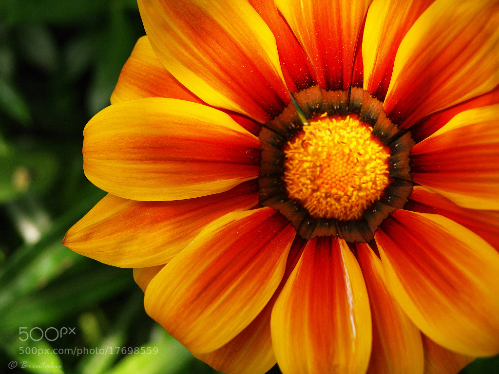 Photograph Colors like fire by Konstantinos Brintakis on 500px