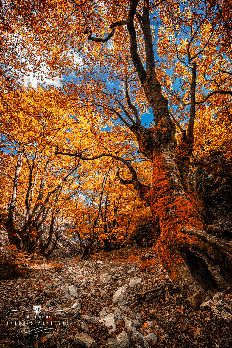 Photograph Foliage by Antonis Panitsas on 500px