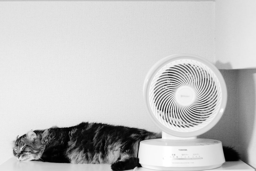 500px.comのBoku Hitoriさんによるa photograph of a fan and a cat