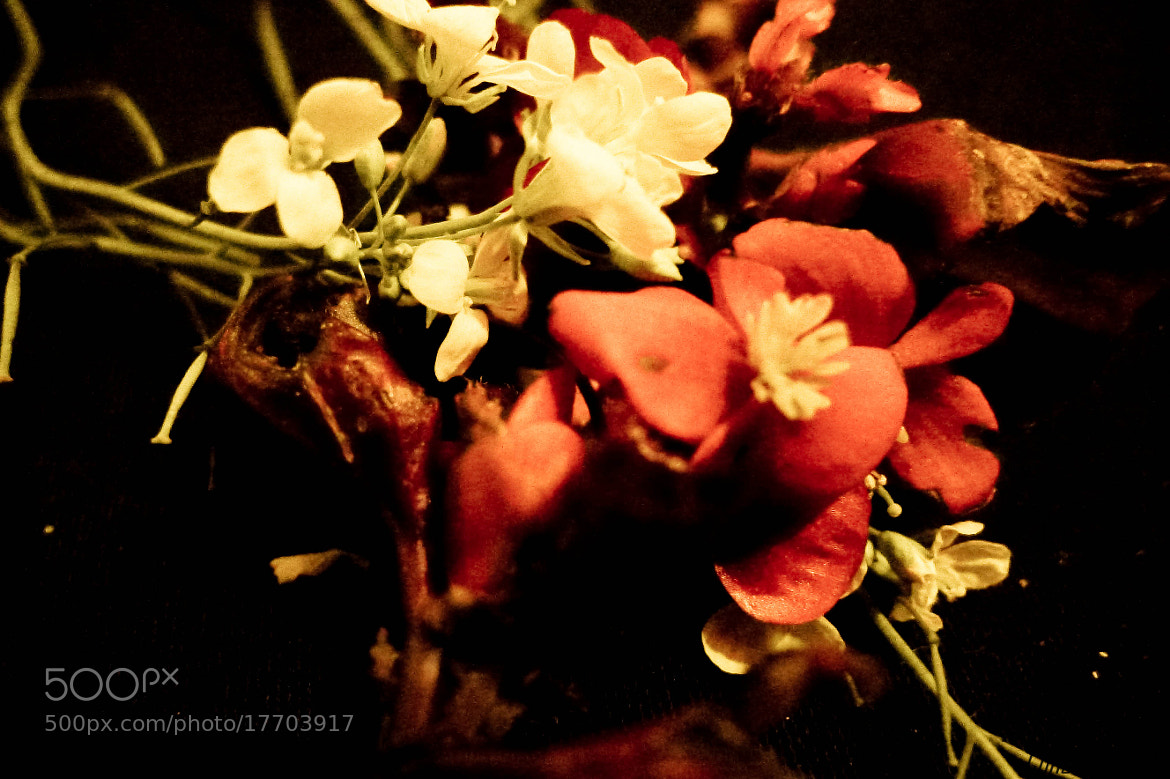 Photograph More flowers autonomy by Conceição Dias on 500px