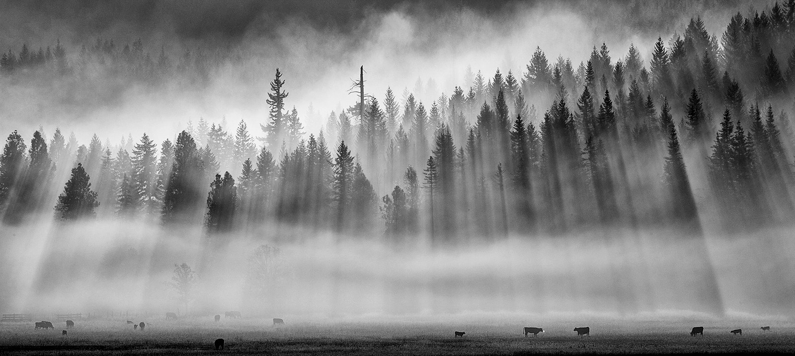 Photograph Roaming in the mist... by Jesse Estes on 500px