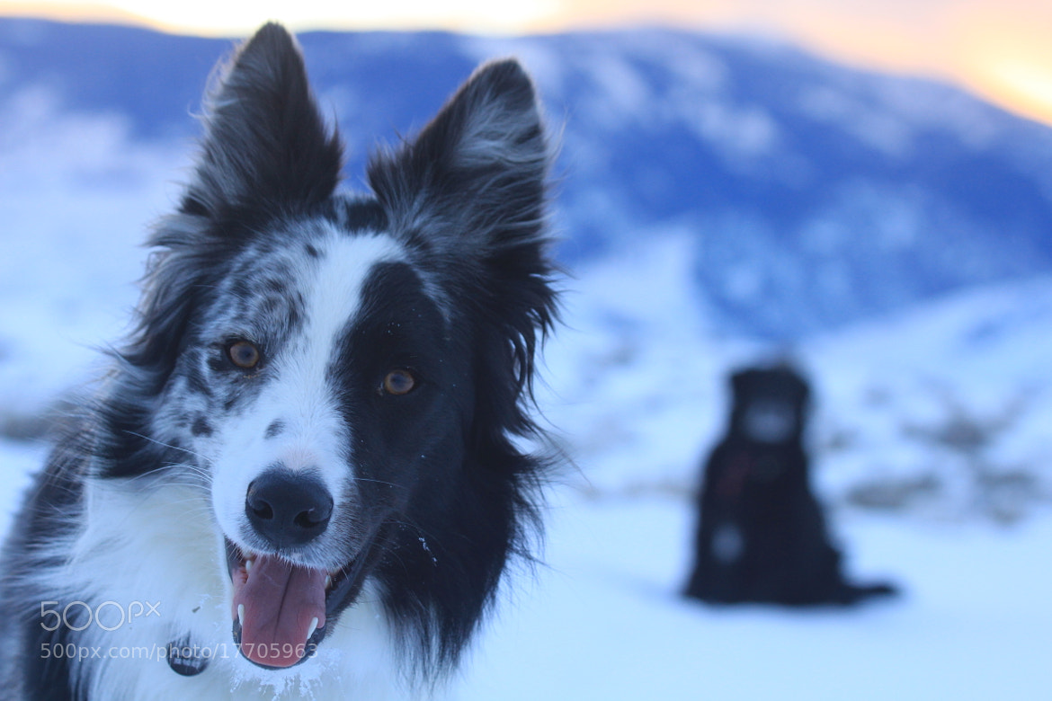 Photograph Winter Dogs by David Lingle on 500px