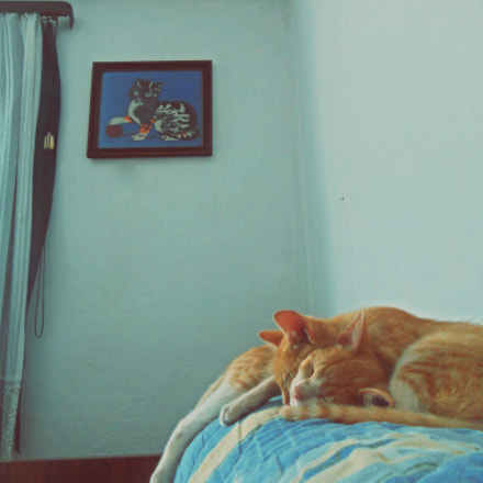 Cats (4) @catsedition8, Nikon COOLPIX S2500